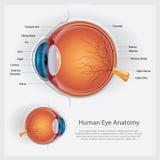 Anatomía del ojo humano Imagen de archivo libre de regalías