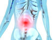 Anatomía femenina - dolor de estómago Imagenes de archivo