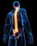 Anatomía masculina de la espina dorsal Foto de archivo