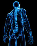 Anatomía masculina de la radiografía de la médula espinal Fotos de archivo libres de regalías