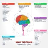 Anatomía y funciones del cerebro humano stock de ilustración