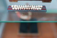 Anatom?a humana de los dientes Ci?rrese para arriba de dientes Concepto de la cl?nica m?dica Foco selectivo fotos de archivo libres de regalías