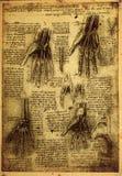 Anatomía Imágenes de archivo libres de regalías