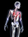 Anatomi - bröstkorgen smärtar Arkivbilder