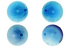 Anatomi för mänskligt öga, näthinna, artär och åder etc. för optisk diskett Arkivfoton