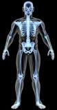 anatomia Immagini Stock Libere da Diritti