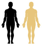 Anatomia. Corpo masculino Foto de Stock Royalty Free
