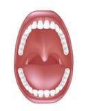 Anatomia da boca ilustração do vetor