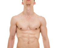 Anatomia da caixa masculina - o homem Muscles Front View foto de stock