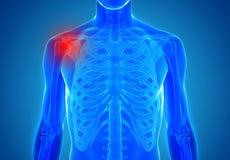 Anatomia de junções humanas - conceito de ferimento Fotos de Stock Royalty Free