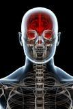 Anatomia dei raggi X sul nero Immagine Stock Libera da Diritti