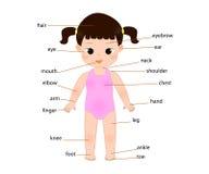 Anatomia del bambino Fotografia Stock
