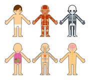 Anatomia del corpo per i bambini Fotografie Stock Libere da Diritti