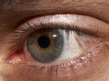 Anatomia dell'occhio dell'adulto Fotografia Stock Libera da Diritti