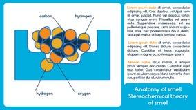 Anatomia dell'odore Teoria di Stereochemical dell'odore Fotografia Stock Libera da Diritti