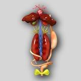 Anatomia della rana Immagini Stock Libere da Diritti