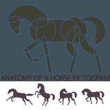 'Anatomia' di un pittogramma del cavallo Fotografia Stock Libera da Diritti