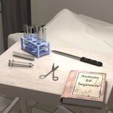 Anatomia dla beginners Zdjęcia Royalty Free