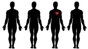 Anatomia do amor Imagens de Stock