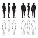 Anatomia do corpo humano, Foto de Stock