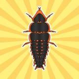 Anatomia do inseto Besouro Duliticola Platerodrilus de Trilobite Esboço do besouro de Trilobite projeto do besouro para Imagens de Stock