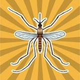 Anatomia do inseto Mosquito realístico da etiqueta Silhueta do mosquito dos pipiens do mosquito projeto do mosquito para o livro  Imagens de Stock Royalty Free