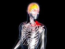 Anatomia - emicrania illustrazione di stock