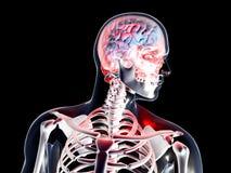 Anatomia - emicrania illustrazione vettoriale