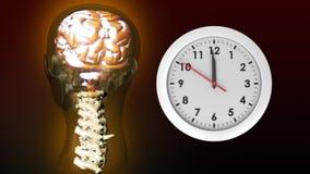 Anatomia głowa i zegar ilustracja wektor