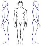Anatomia humana Imagem de Stock Royalty Free