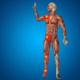 anatomia humana da dor do homem 3D no fundo azul Imagem de Stock Royalty Free