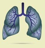 Anatomia humana dos pulmões para a asma, tuberculose, pneumonia Pulmão Ca Imagens de Stock