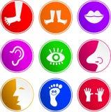 anatomia ikon znak ilustracji