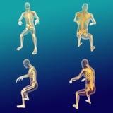 Anatomia maschio 2 Fotografia Stock Libera da Diritti