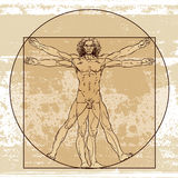 Anatomia masculina Foto de Stock Royalty Free