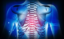 anatomia medica della costola umana 3d illustrazione di stock