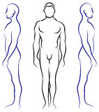 Anatomia umana Immagine Stock Libera da Diritti