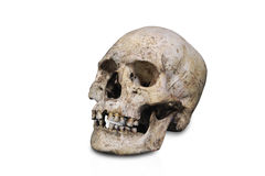 Anatomia umana isolata cranio Immagini Stock Libere da Diritti