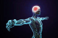 Anatomia umana - sistema nervoso centrale illustrazione di stock
