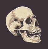 Anatomic Grunge Skull Stock Photo