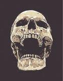 Anatomic Grunge Skull Stock Photography