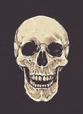 Anatomic Grunge Skull Royalty Free Stock Image