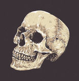 Anatomic Grunge Skull Stock Images