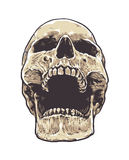 Anatomic Grunge Skull. Vector Art. Detailed hand drawn illustration of skull isolated on white background. Colored version. Tattoo style skull art. Grunge royalty free illustration