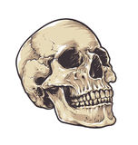 Anatomic Grunge Skull Royalty Free Stock Photos