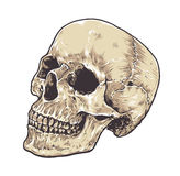 Anatomic Grunge Skull. Vector Art. Detailed hand drawn illustration of skull isolated on white background. Colored version. Tattoo style skull art. Grunge vector illustration