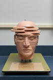 Anatomical, cross-sectioned human head model. An anatomical, cross-sectioned human head educational model Stock Images