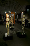 Anatomical exhibits at the exhibition Stock Photography