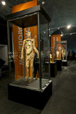 Anatomical exhibits at the exhibition Royalty Free Stock Photo