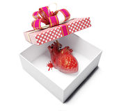 Anatomical heart. As a gift. creative concept Stock Images